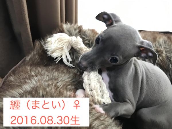 20161107003.jpg